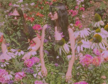 the stargazer lilies shoegaze