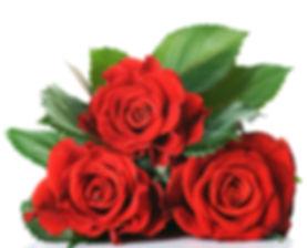 Купить садовые розы оптом и в розницу в Москве дешево
