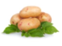 Купить картофель оптом и в розницу в Москве