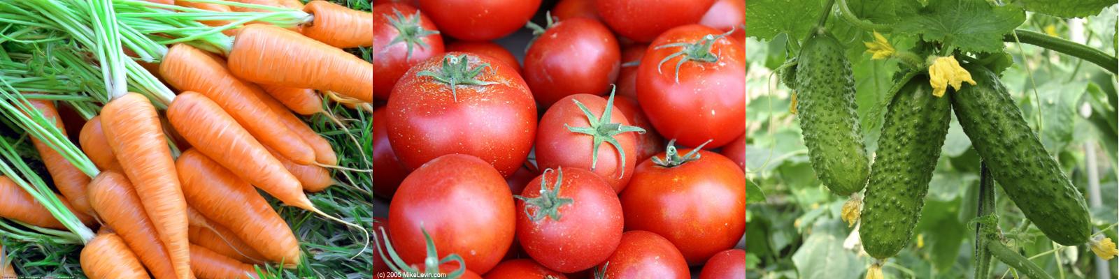 томат, морковь, огурцы
