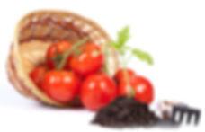 купить рассаду томата оптом в Москве дешево