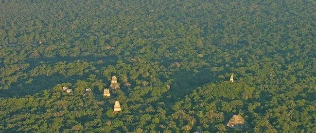 Aerial Tikal.jpeg