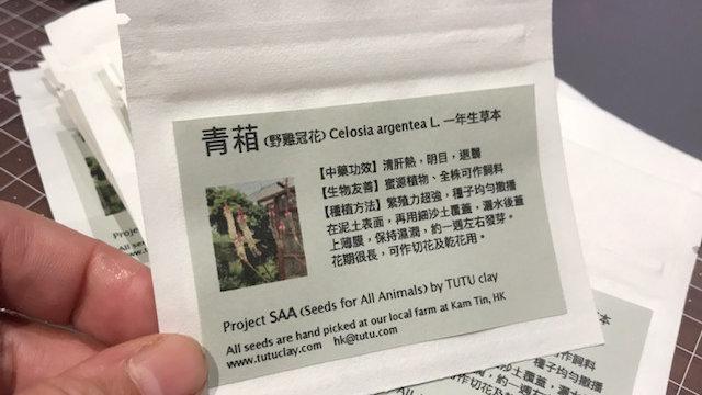 hand picked Celosia argentea seed harvested at tutu farm
