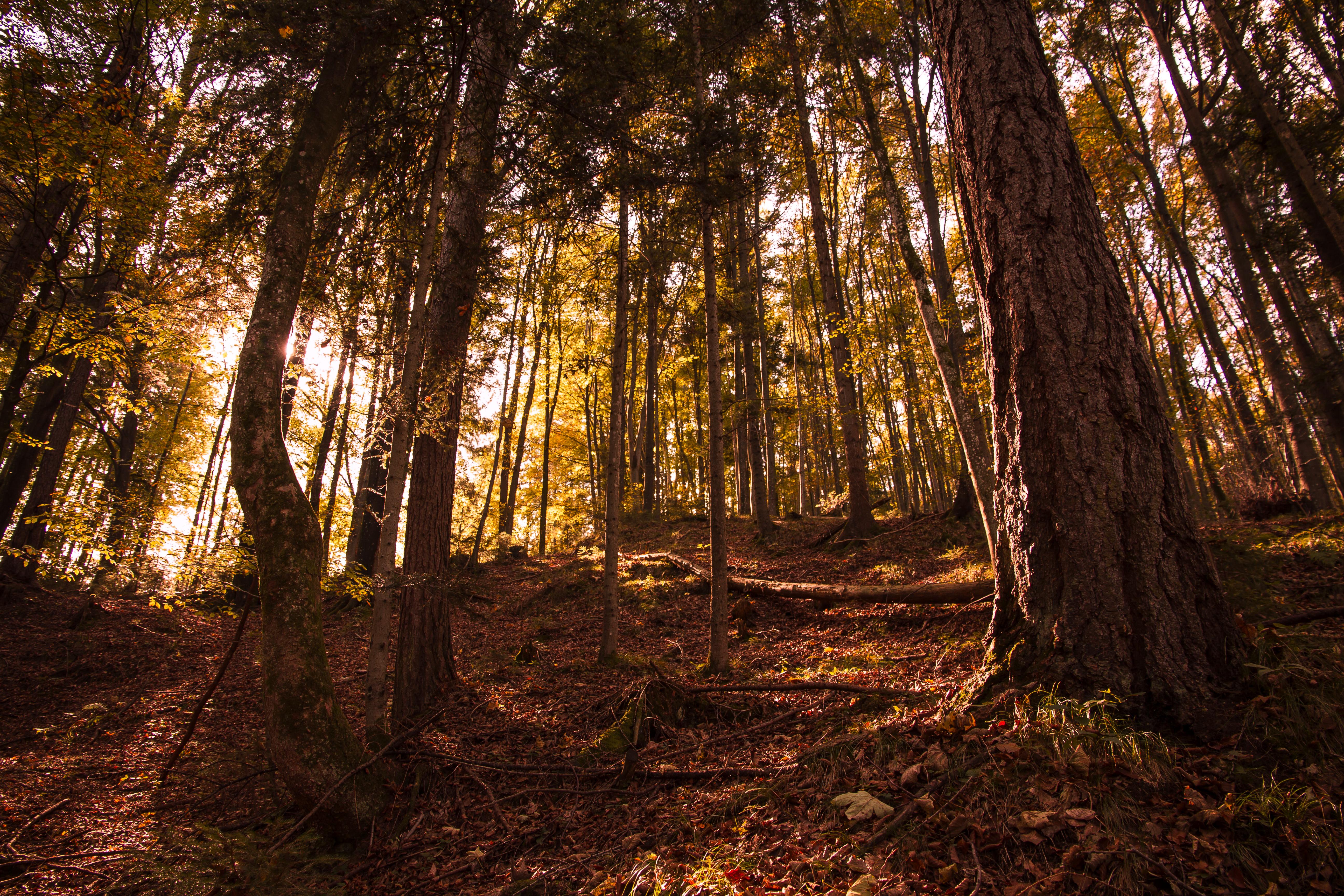Herbstwald1