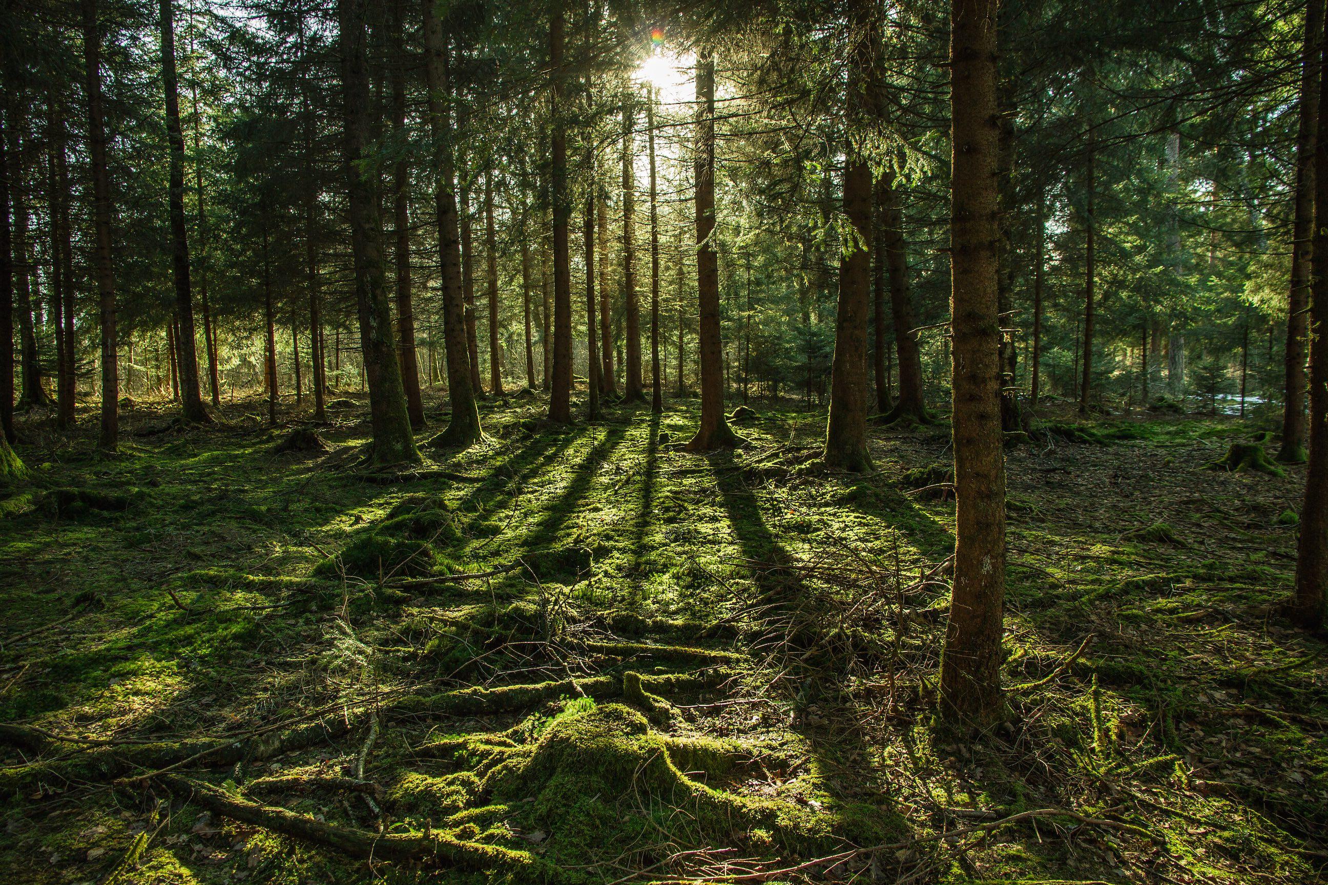 Wald_Große_Runde_Lichtstrahlen_klein