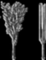 SafTfene Plastic Birch