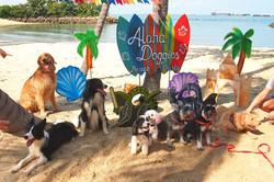Aloha-Doggies-Beach-Party-group