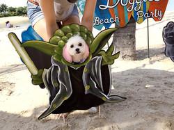 Aloha-Doggies-Beach-Party-Yoda