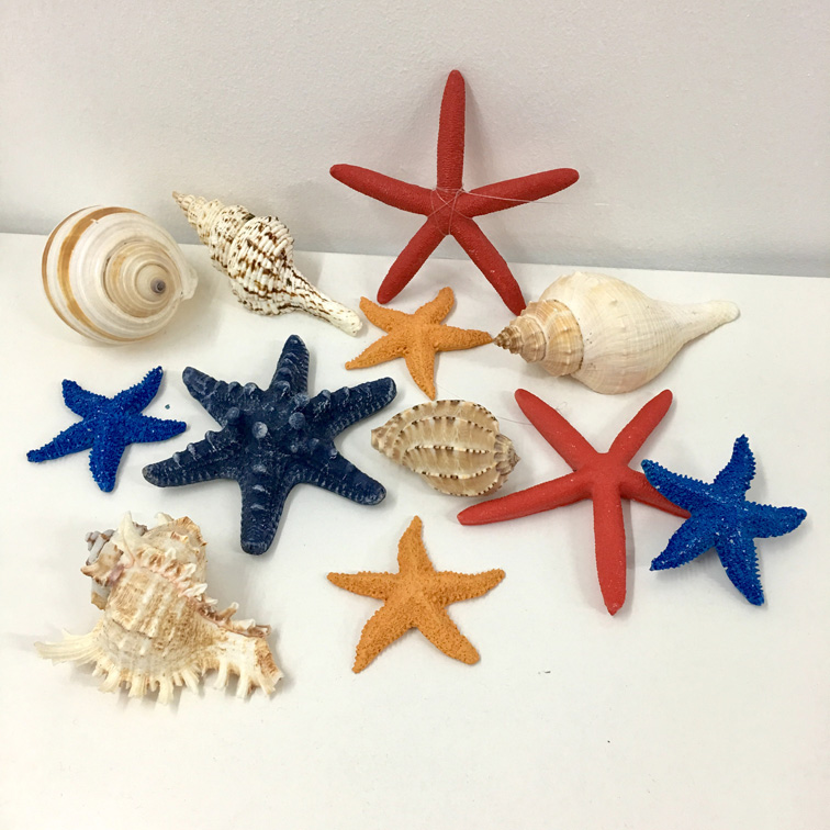 Sea Shells & Starfishes