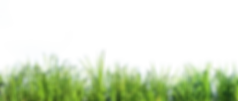 tall-grass-nature-png-17.png