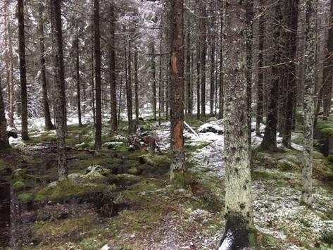 Metsä 2.JPG