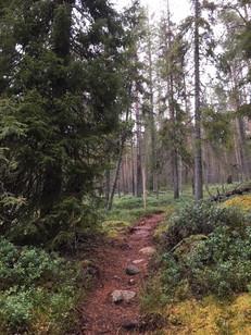 Metsäpolku.JPG