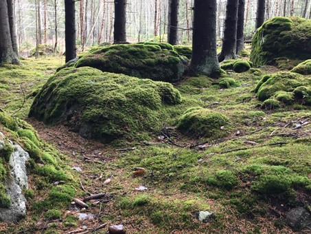 Metsässä on taikaa