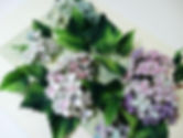 MHuJ4-lPtrk.jpg