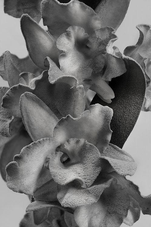Florallure