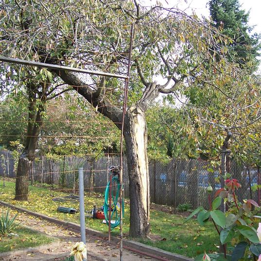 Likvidace nemocného, starého stromu - A+A Renax