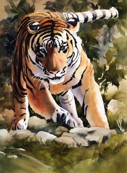 Tiger Charging.jpeg