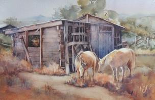 Sunny Horses.jpeg