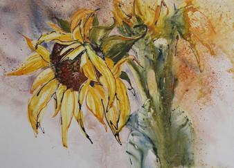 Floral Riot Sunflower.jpeg