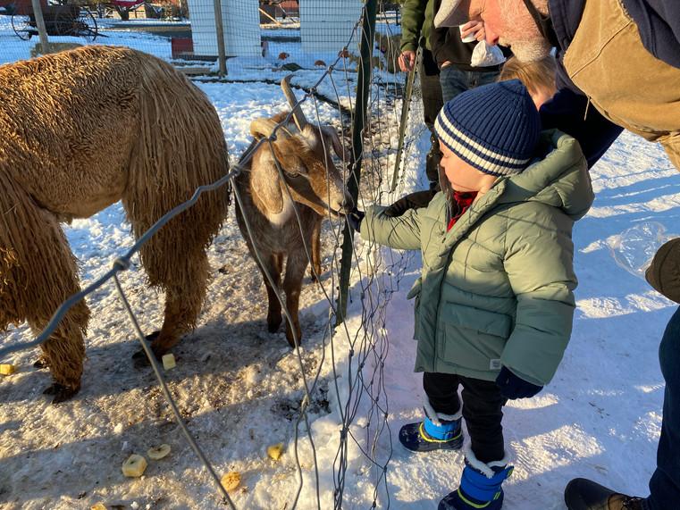 Feeding the goats at a farm in Greenbluff near Spokane