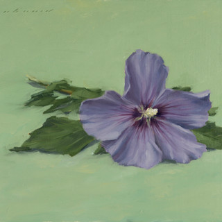 Hibiscus flower sketch