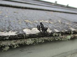 屋根塗装後のスレート屋根の軒先