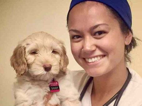 Yellowknife veterinarian starts her own mobile clinic