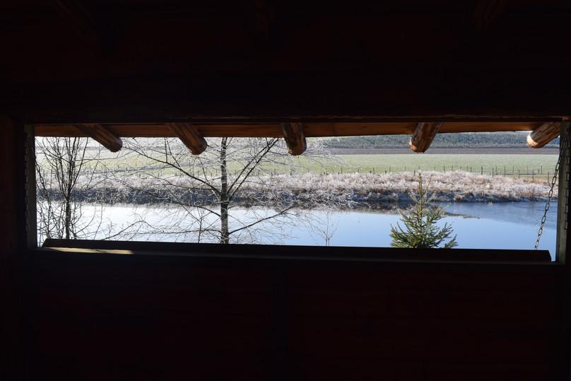 Vu de la cabane sur l'étang