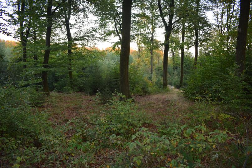 des forêts luxuriantes et ressourçantes