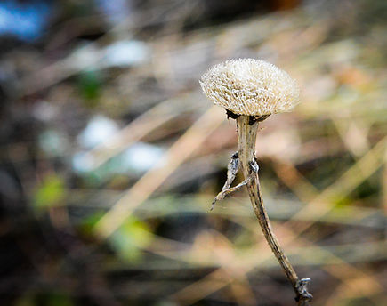 Valerie Hammacher photographer Foto Photography Nature Blume Flower