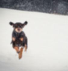 Animal, Foto, Photography, Tierfotografie, Hund, dog, Mischling, mongrel