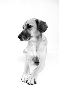 Animal, Foto, Photography, Tierfotografie, Hund, black&white, dog, Mischling, mongrel