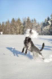 Animal, Foto, Photography, Tierfotografie, Hund, studio, Tierportrait, animal portrait, Hund, dog, Schnee, snow