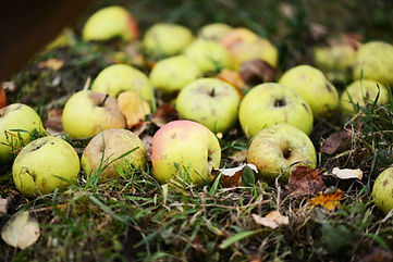 Foodphotgraphy Apple Apfel