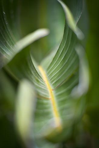 Valerie Hammacher photographer Foto Photography Nature