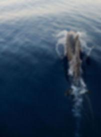 Animal, Foto, Photography, Tierfotografie, Hund, studio, Tierportrait, animal portrait, horses, dolphin