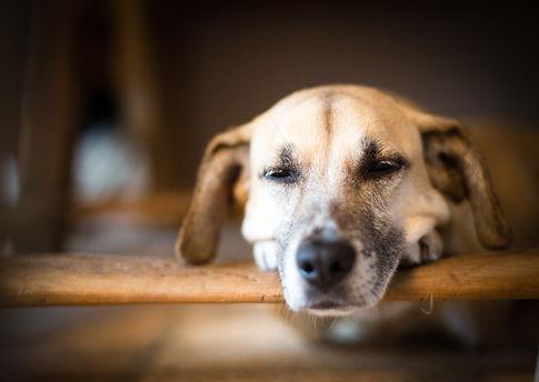 Animal, Foto, Photography, Tierfotografie, Hund, Portrait, dog, Mischling, mongrel