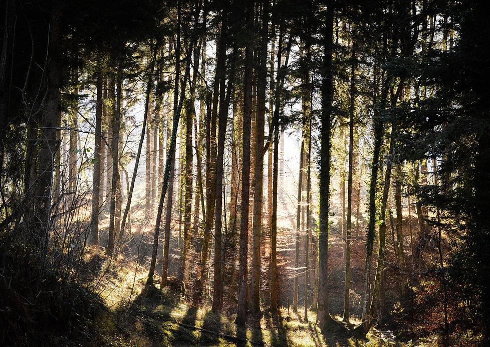 Valerie Hammacher photographer Foto Photography Nature Wood Wald tree baum
