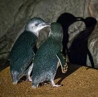 Penguins 2.jpg