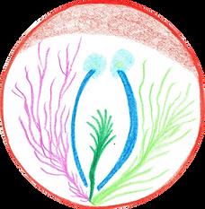 11 Mandala