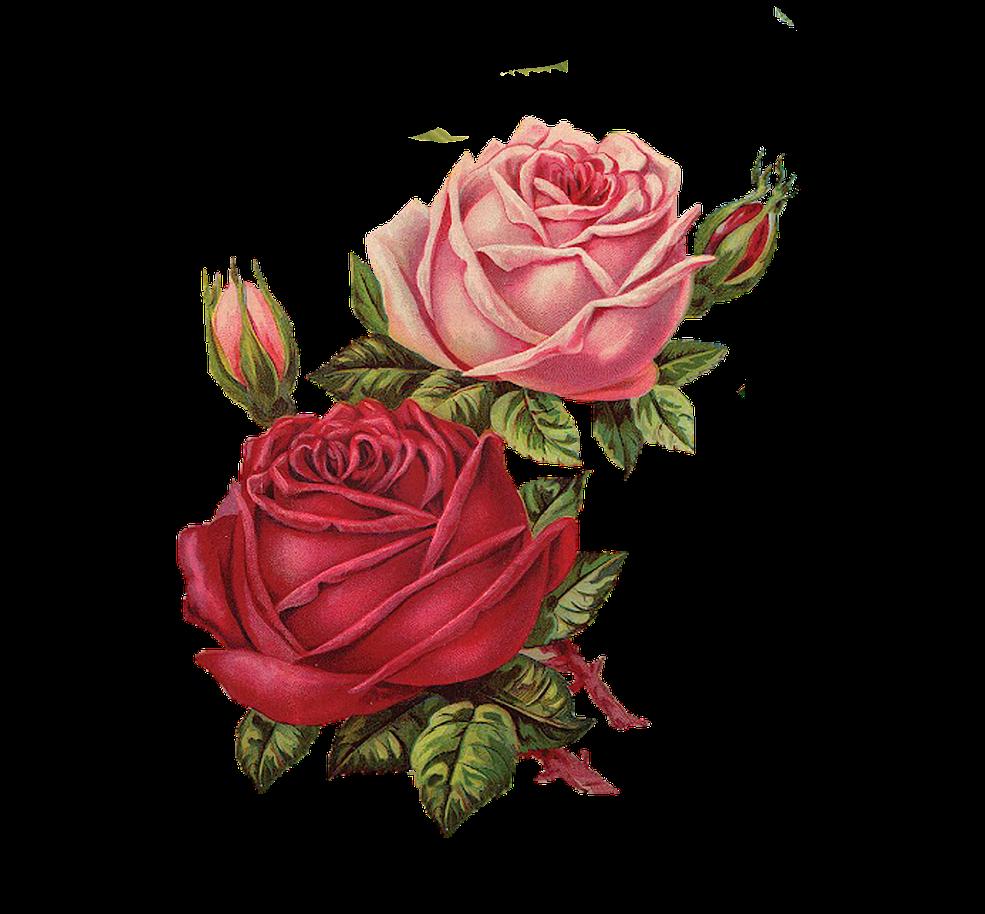 rose2.png