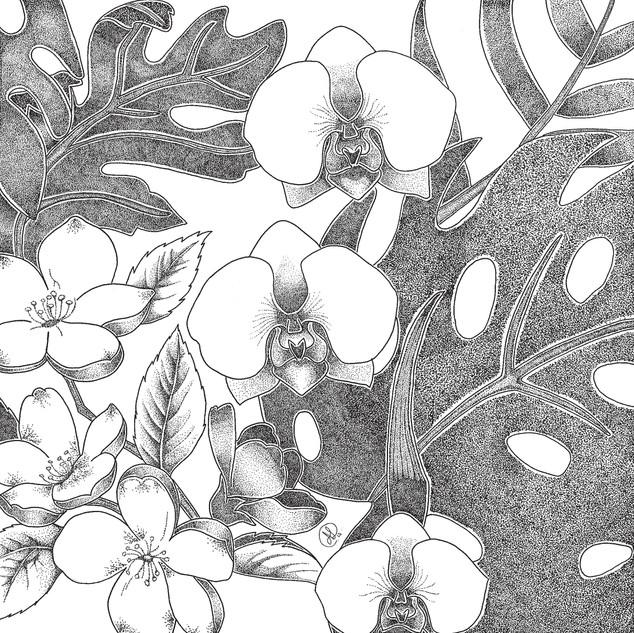 Dia da Botânica