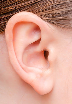 Human-ear.jpg