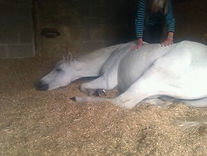 Horse healing.JPG