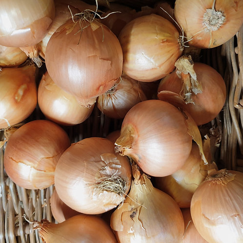 Cooking Onions 1kg