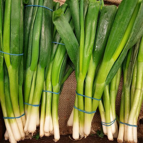 Spring Onions per Bundle