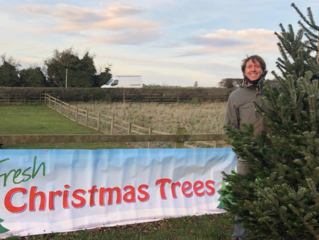 Christmas 'not cancelled' at Northampton farm where trees go on sale this weekend