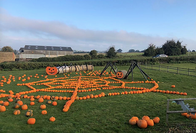 Smiths field all set up reasdy for pumpk