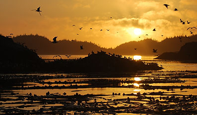 Whale Watching Tour, British Columbia Sunset