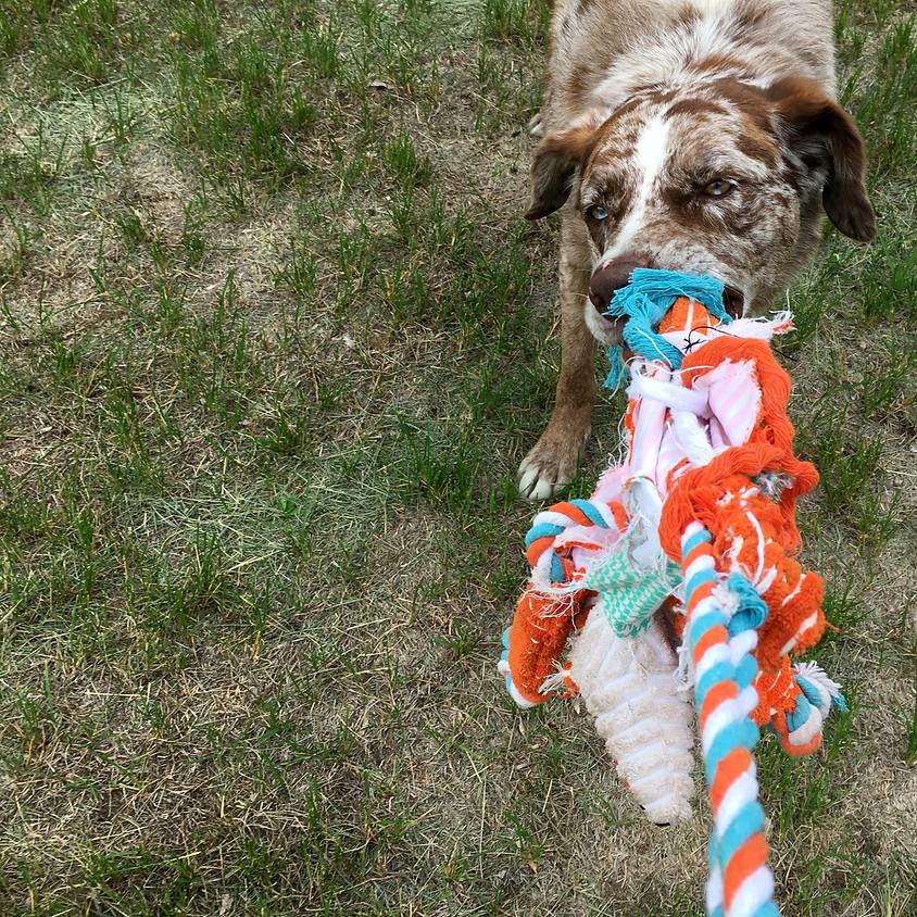 Spotkursus: Den legeglade hund & belønning med legetøj